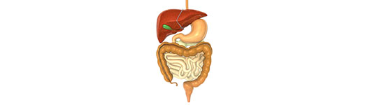 The Gastrointestinal (GI) Tract | Manhasset NY